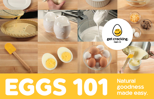 image resources eggs101 en