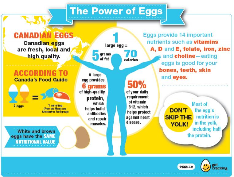 Egg Nutrition Eggs